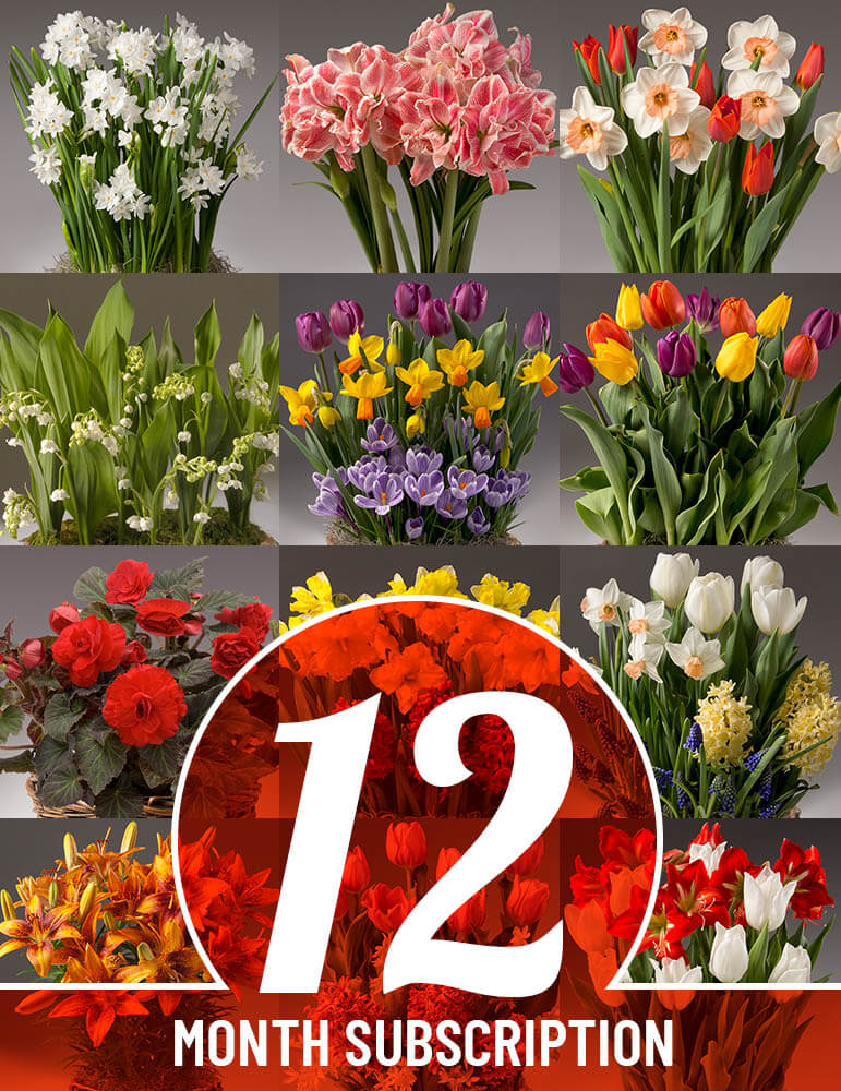 12 Month Potted Bulb Garden Subscription