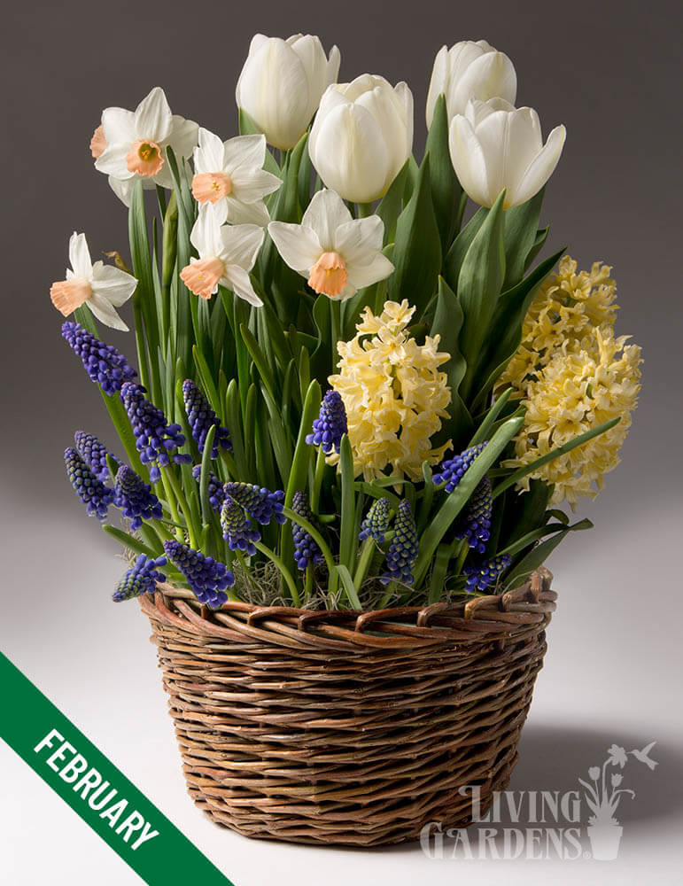 12 Month Potted Bulb Garden Subscription - MG0012