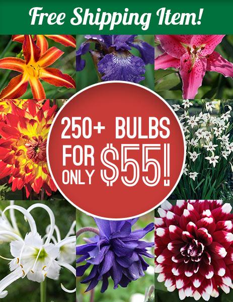 2018 Summer Blooming Flowers Grab Bag Holland Bulb Farms 79200