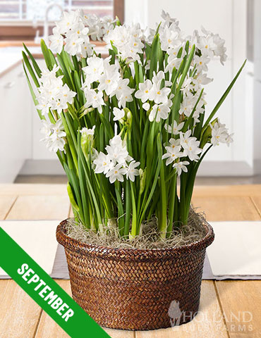 3 Month Potted Bulb Garden Subscription - MG0003