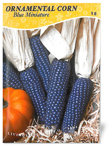 Blue Miniature Ornamental Corn