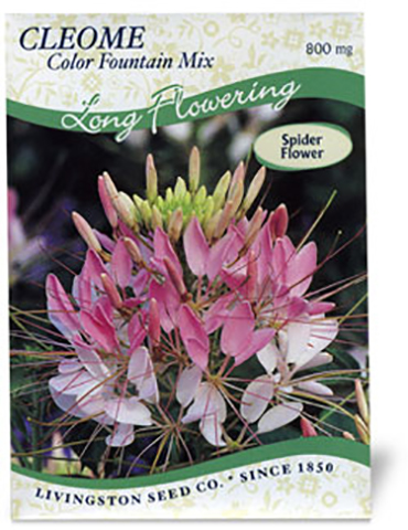 Cleome - Color Fountain Mix