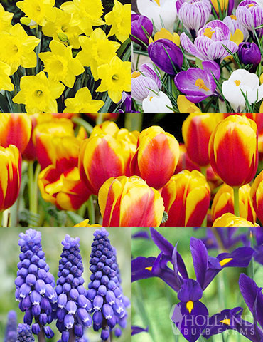 Fall flower bulbs fall planting fall planted perennials complete spring flower bulb garden mightylinksfo