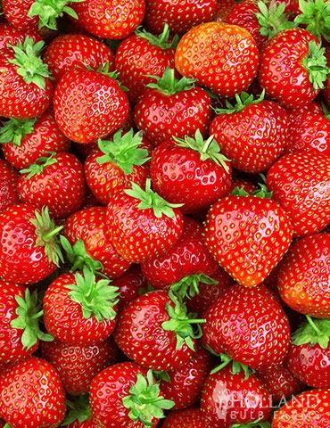 Delicious Sparkle Strawberries