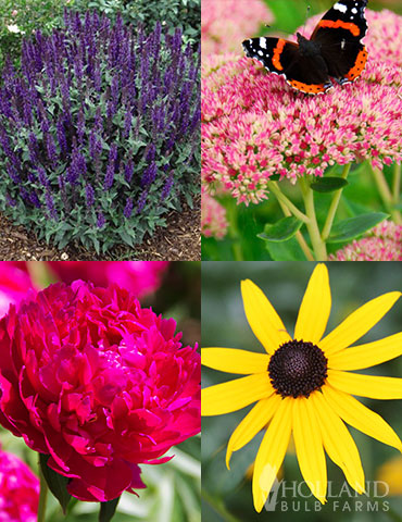 Easy Complete Sun Garden sunny flowers, full sun perennials zone 5, sunny garden plans, plants that grow in full sun, top 10 perennials, full sun perennial garden designs, 3 season perennial garden plans, perennial plant of the year, perennial garden kits