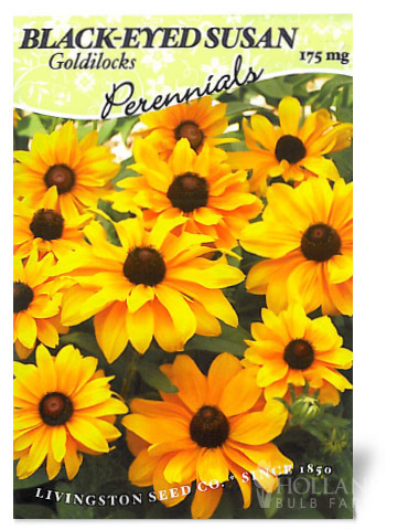 Goldilocks Black-Eyed Susan
