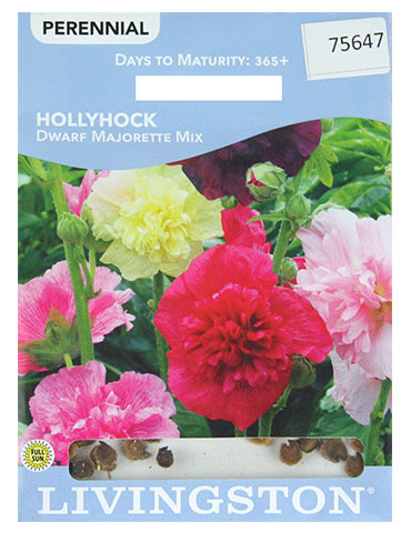 Hollyhock Dwarf Mix