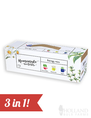 Homemade Herb Kit- Energy Mix Tea Herbs indoor herbal tea growing kit, grow herbs for herbal tea, herbal tea kit, chamomile tea kit, chamomile seeds, grow your own chamomile tea plant, chamomile tea grow kit, grow your own herb tea garden, thyme tea kit, lemon balm seeds, lemon balm tea kit