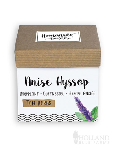 Homemade Herb Kit- Tea Anise Hyssop growing tea herbs indoors, indoor herb garden kit, best indoor herb garden kit, herbs for tea, anise hyssop seeds, anise seeds, indoor her starting kit, benefits of anise, benefits of anise tea