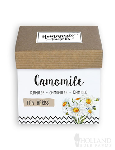 Homemade Herb Kit- Tea Chamomile indoor herbal tea growing kit, grow herbs for herbal tea, herbal tea kit, chamomile tea kit, chamomile seeds, grow your own chamomile tea plant, chamomile tea grow kit, grow your own herb tea garden