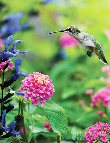 Hummingbird & Butterfly Garden Jumbo Seed Packet
