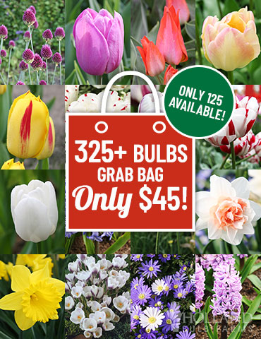 Last Chance for 2019 Spring Blooms Grab Bag - 89221