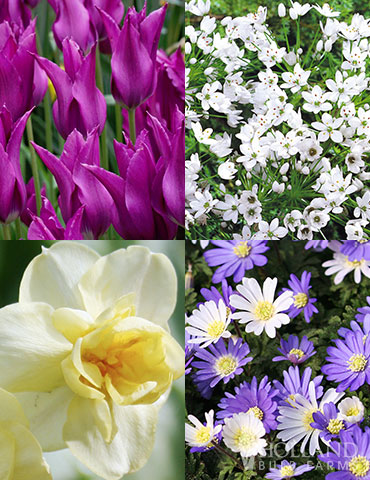 Late Spring Blooms Collection flowers that bloom in may, flowers that bloom in june, late spring flowers, what to plant for blooms in late spring, late blooming tulips, late blooming daffodils