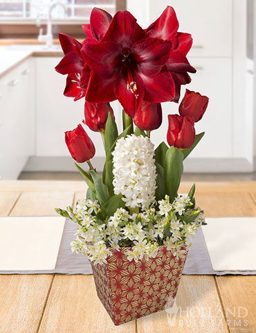 Merry Blessings Potted Bulb Garden  flower bulbs, indoor bulb garden, winter bulb garden, potted bulbs, potted flower bulbs, flowers that bloom indoors, gifts for gardeners