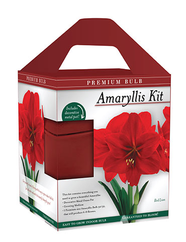 Premium Red Lion Amaryllis Kit - 92172