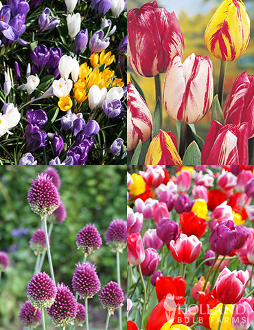 Prime Fall Flower Bulb Garden best place to buy fall bulbs, fall bulb collections, fall blooming bulbs, plant bulbs for sale, fall bulbs wholesale, tulip deals,