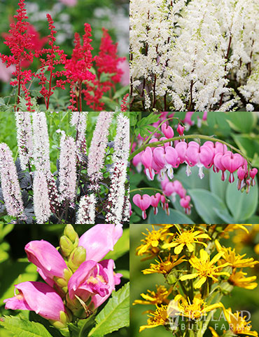 Shady Blooms Spring through Summer Collection shade loving perennials, plants that tolerate shade, plants that bloom all summer, shade garden plants, plants for shaded garden areas, plants for shaded garden corners