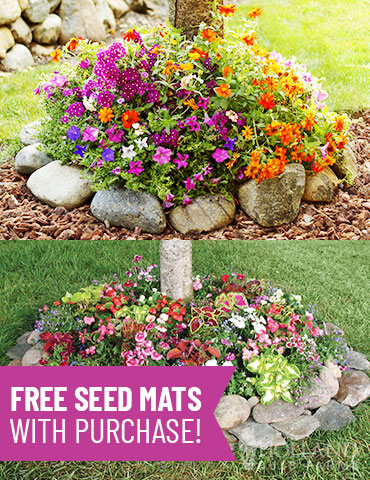 Sun and Shade Tree Ring Seed Mat Duo sunny plants for around a tree, shade plants for under a tree, seed mats, easy to grow annuals, shady tree ring, sunny tree ring