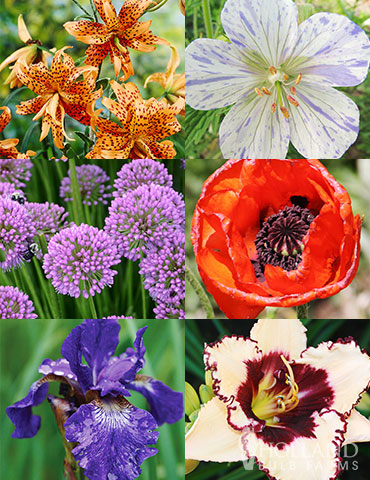 Sunny Blooms Spring Through Summer Collection plants that bloom for a long time, gardens that bloom from spring through summer, blooms all summer, spring blooming perennials, summer blooming perennials