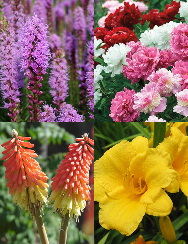 Ultimate Sun Perennial Value Collection