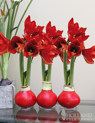 Wax Amaryllis Red Collection (3-Pack) - 92171