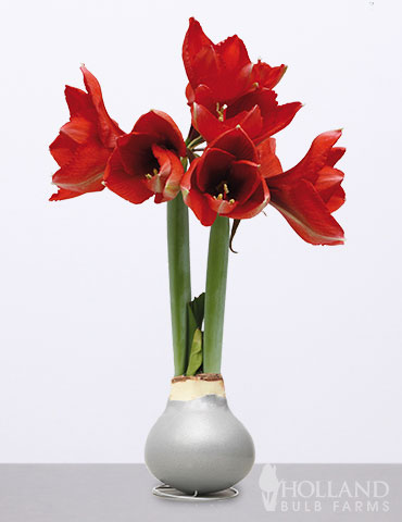 Wax Amaryllis Silver Base