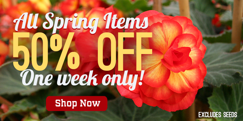 All Spring items 50% off
