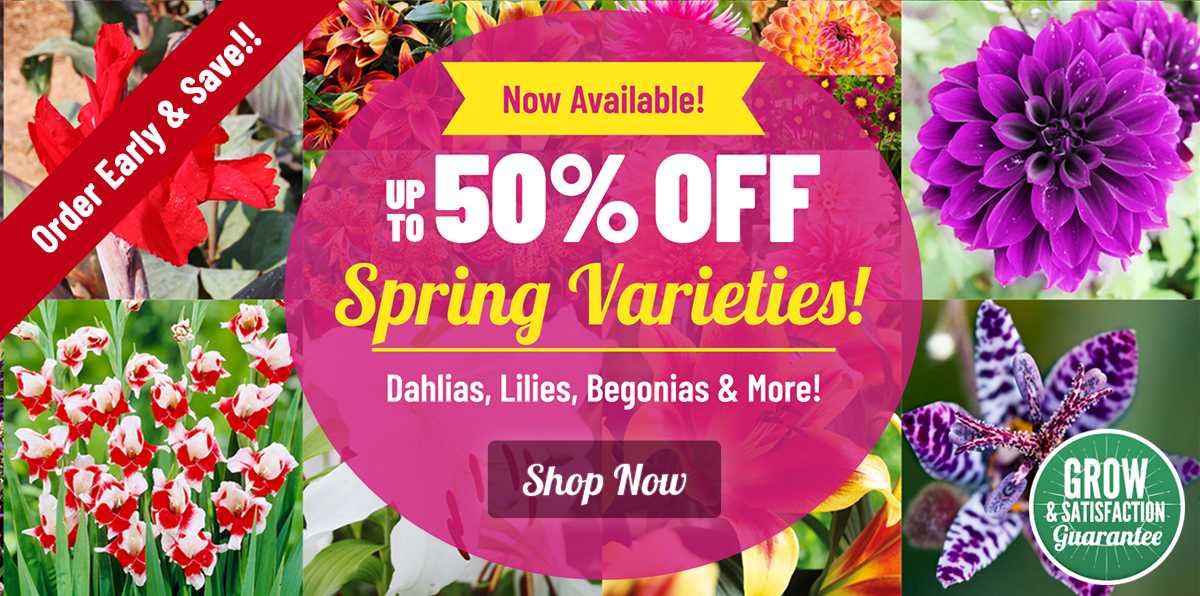 SPRING LAUNCH: UP TO 50% OFF ALL Spring Flowers and Perennials!