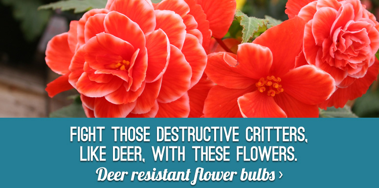 Deer Resistant Flower Bulbs!