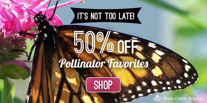 Save 50% on Pollinator Favorites
