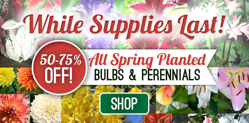Up to 75% OFF on All Spring-Planted Bulbs and Perennials