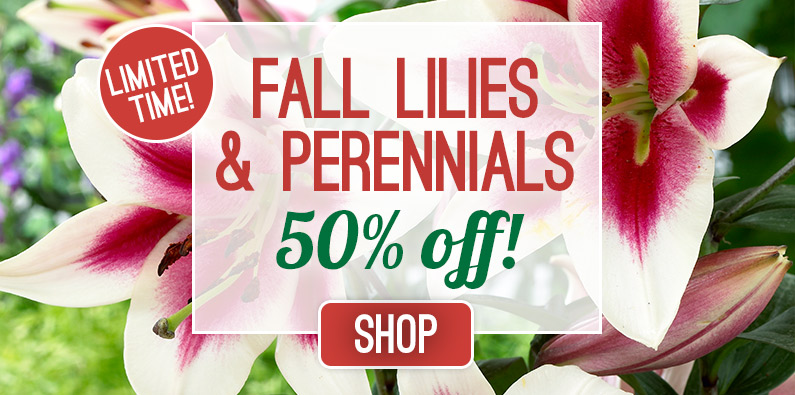 50% OFF All Fall Lilies and Perennials