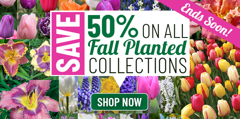 50% OFF Fall Collections!
