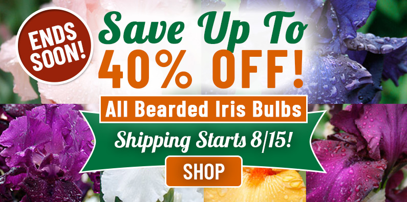 Up to 40% OFF All Bearded Iris!