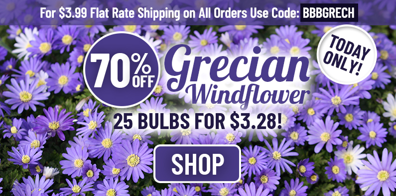 TODAY ONLY: 70% OFF Our Grecian Windflower