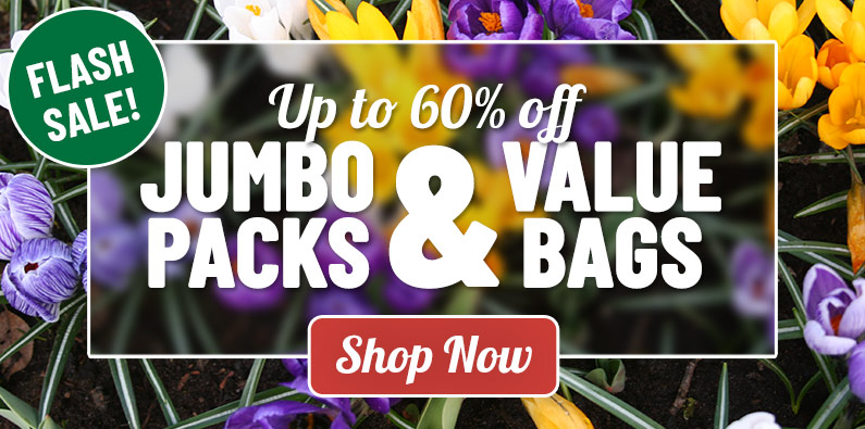 FLASH SALE: Up to 60% OFF Value Packs and Bags