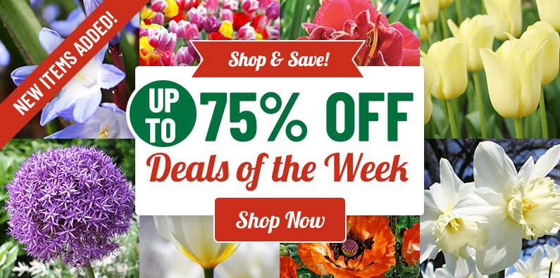 UP TO 75% OFF Sale - While Supplies Last!