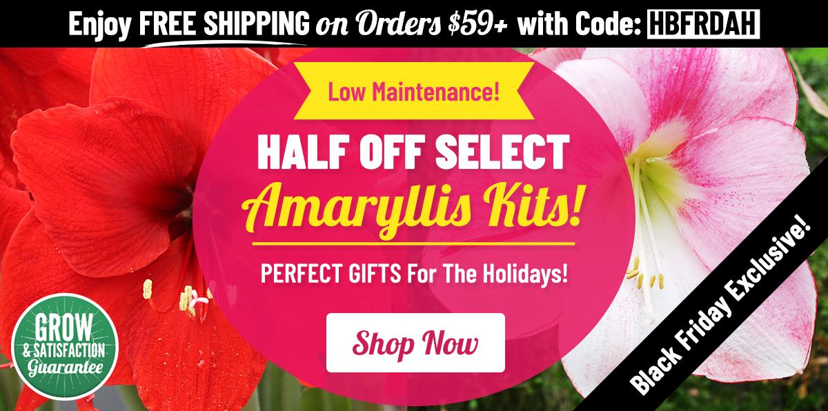 BLACK FRIDAY: HALF OFF Select Amaryllis Kits!