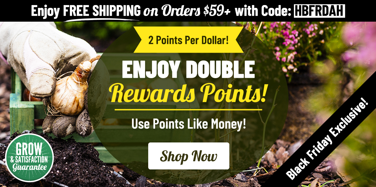 BLACK FRIDAY: Double Reward Points!