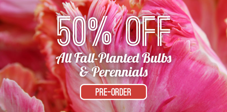 Pre-Order For Fall & Save 50% OFF!