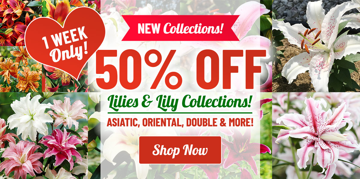 LIMITED TIME: 50% OFF Lily Bulbs & Collections!