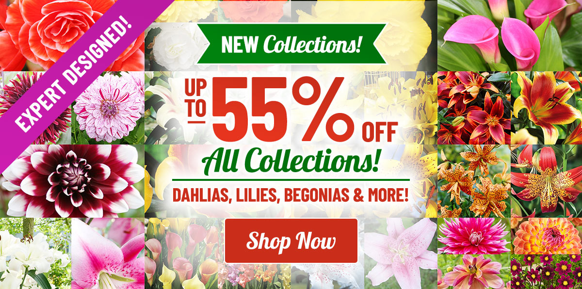 Up To 55% OFF Spring Collections!