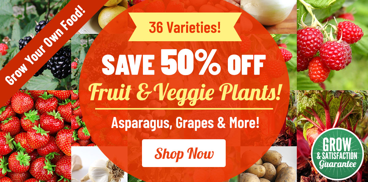Up To 50% OFF ALL Fruit and Vegetable Plants!