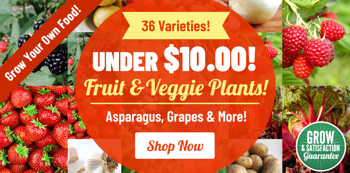 Fruit & Vegetable Plants Under $10!