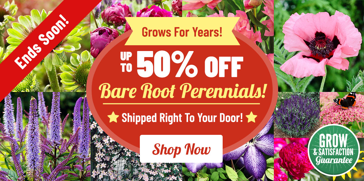 Up To 50% Bulbs & Perennials!