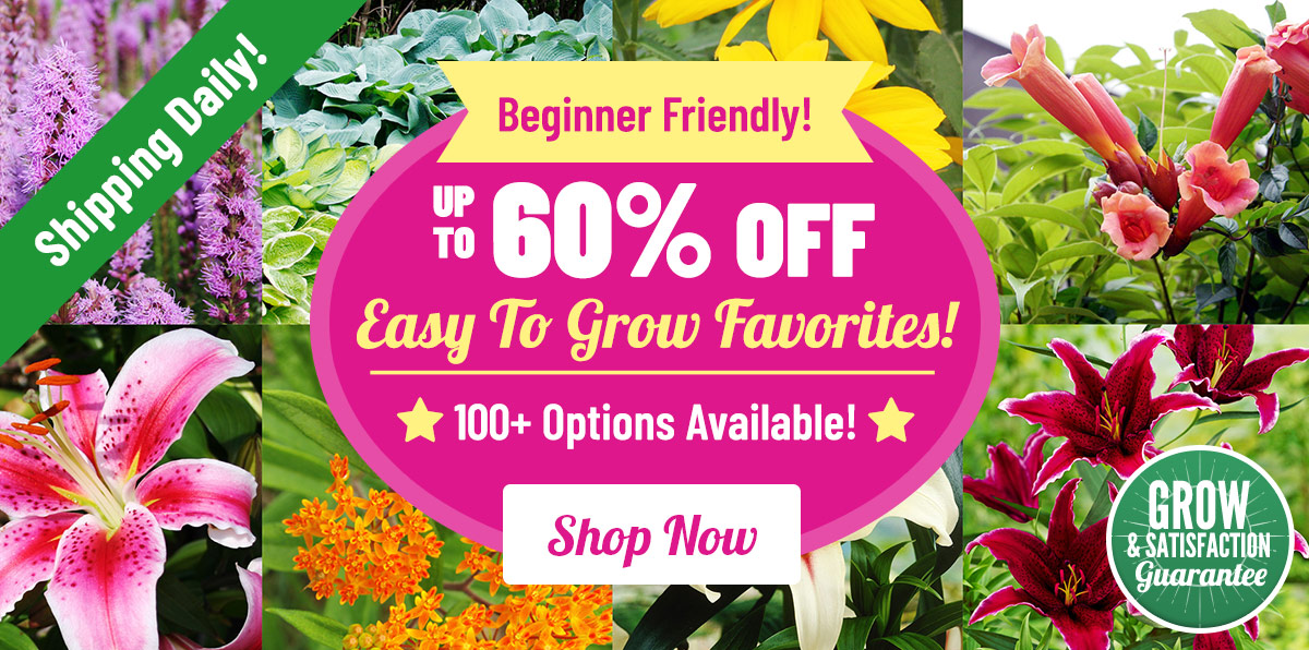 Up To 60% OFF Easy To Grow Favorites!