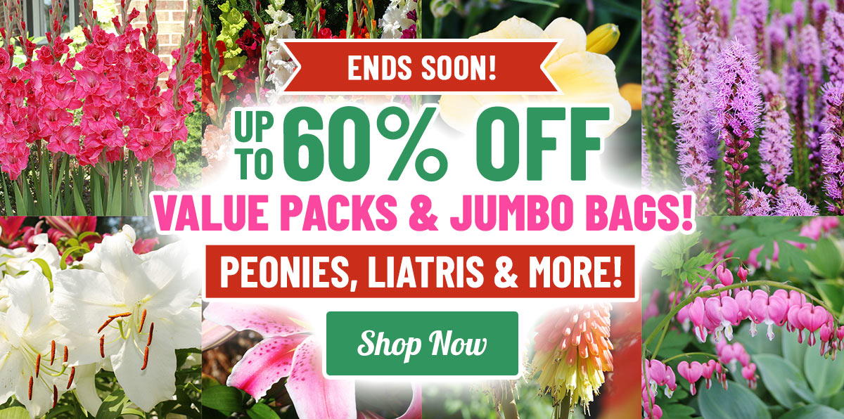 ENDS SOON: 50-60% OFF ALL Value Packs & Jumbo Bags!