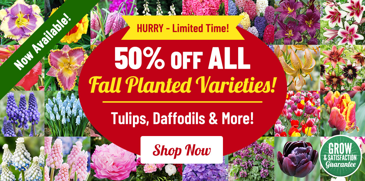 FALL KICKOFF: 50% OFF ALL Fall!