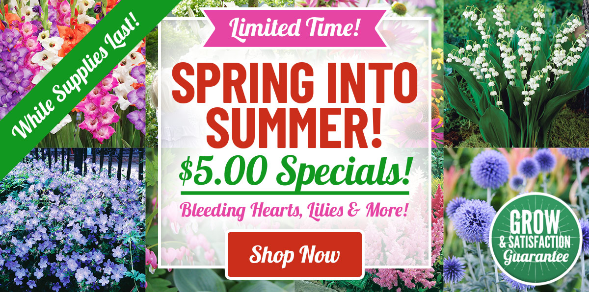 $5 Spring Into Summer Sale!