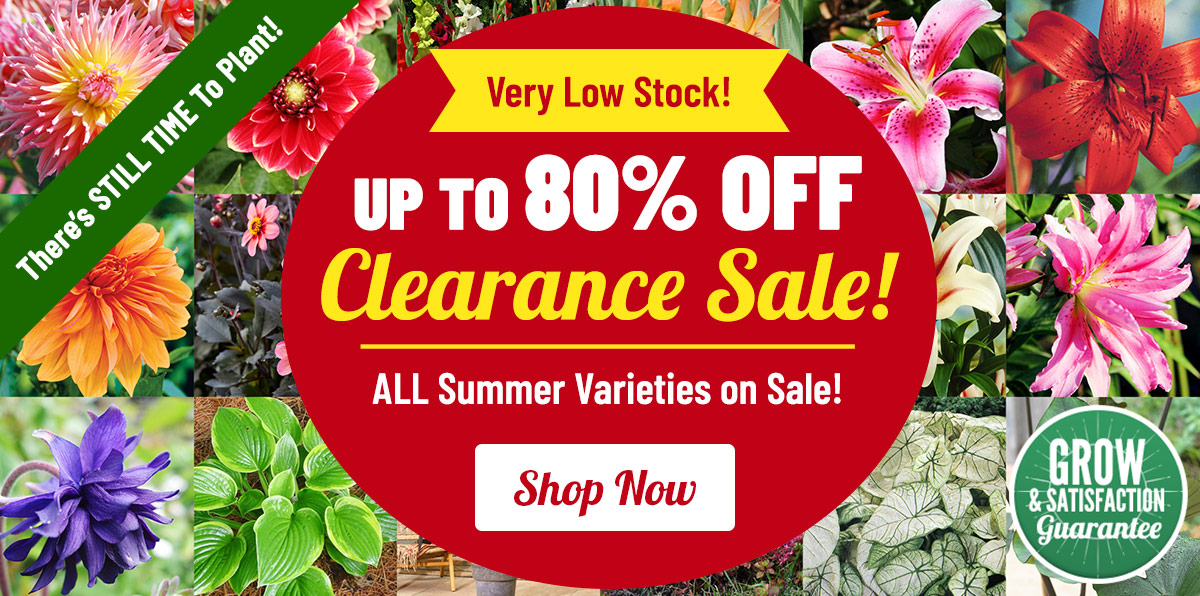 CLEARANCE: Up To 80% OFF Summer Blooms!